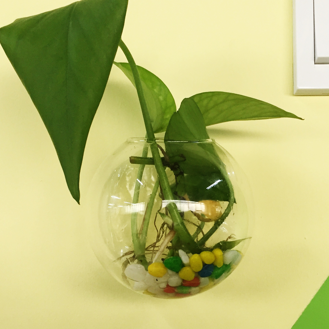 Wall hanging plant flower vase terrarium glass ball bottle fish image is loading wall hanging plant flower vase terrarium glass ball reviewsmspy